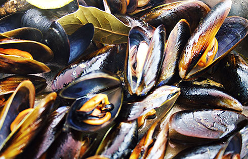 Mussels: steamed or fishermen style ( * +)